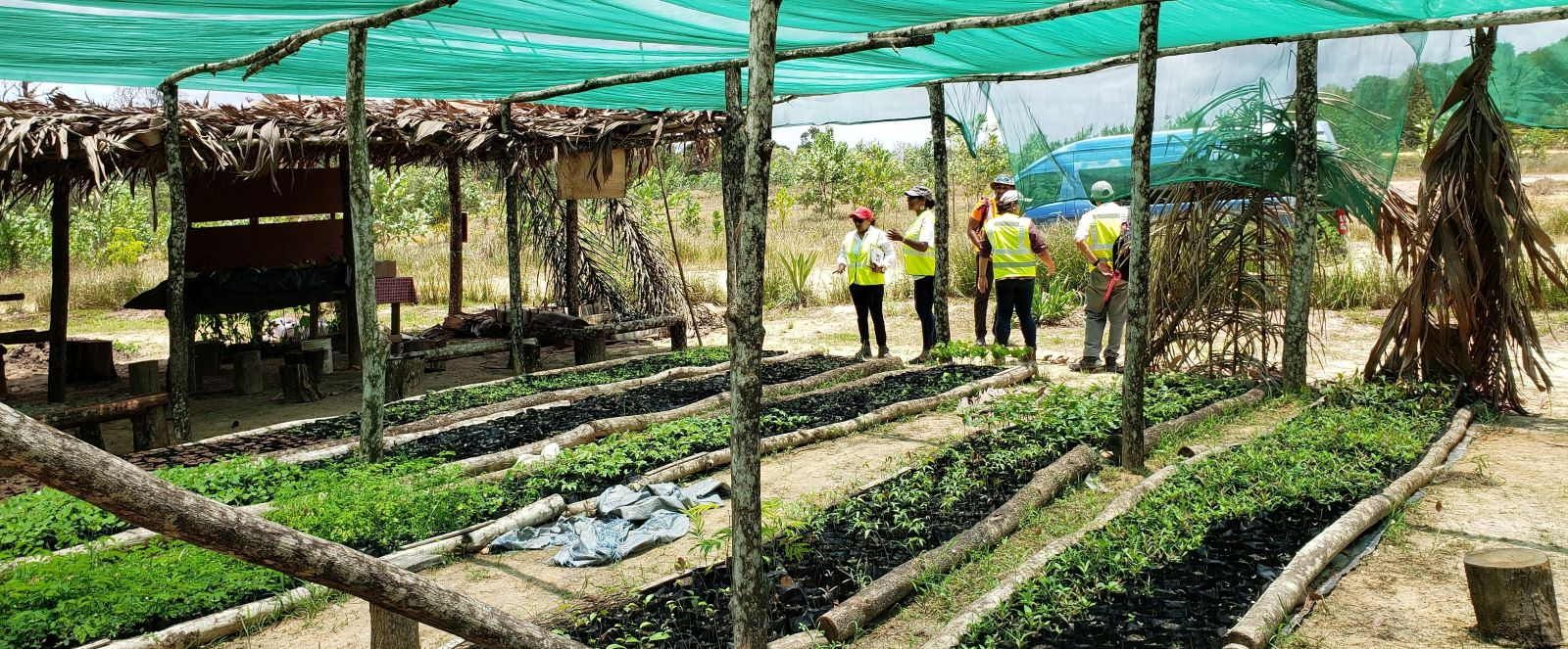 Plant nursery at project site, NCQL, Trinidad